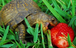 Hungry-Turtle-Wallpapers-2560x1600